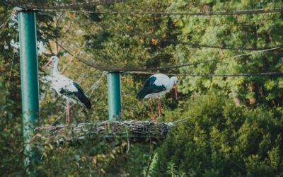 Stadtgarten-Störche: Wir sind dann mal weg…