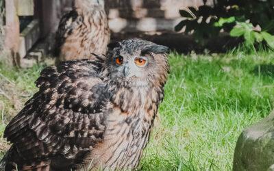 Vogelpark: Uhus haben neue Heimat
