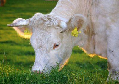 Massentierhaltung und Tierschutz