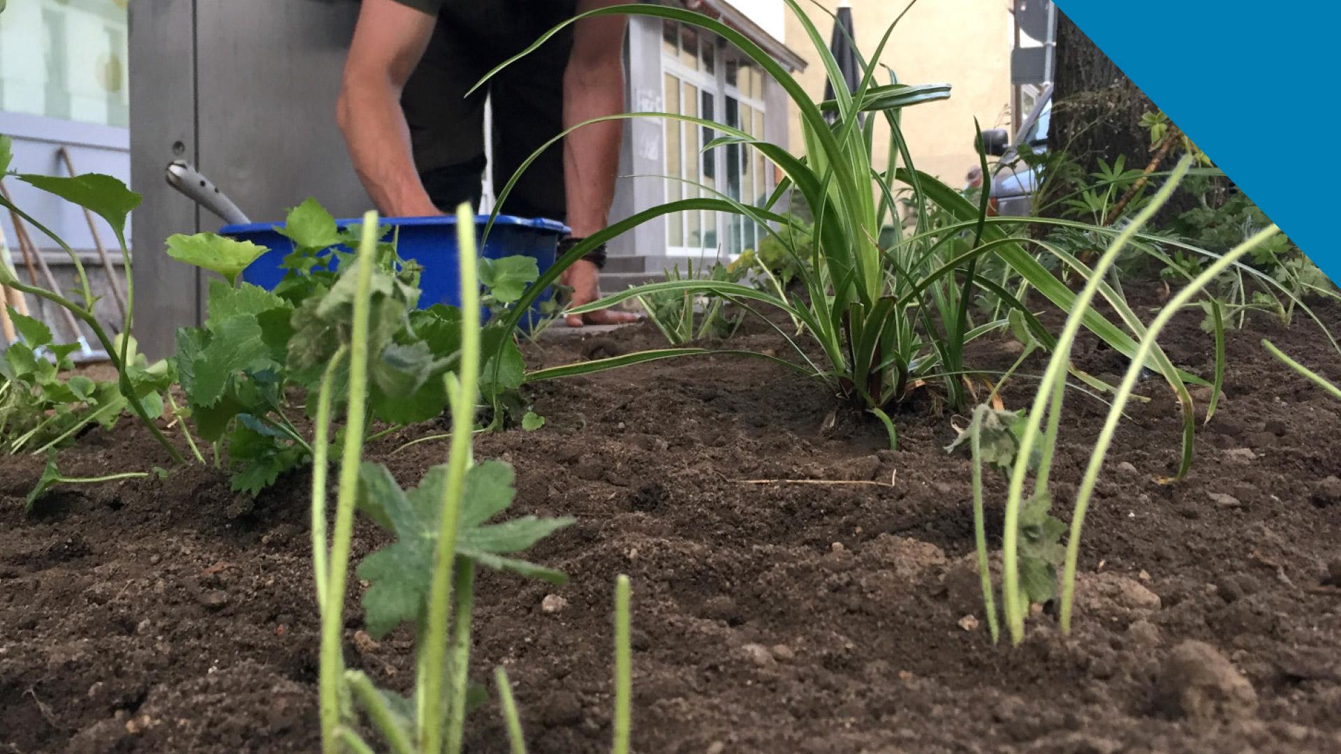 wattenscheider-gesundheitswochen-urban-gardening-2018